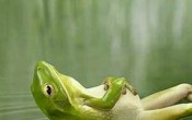 resting-frog-funny-animal-pic
